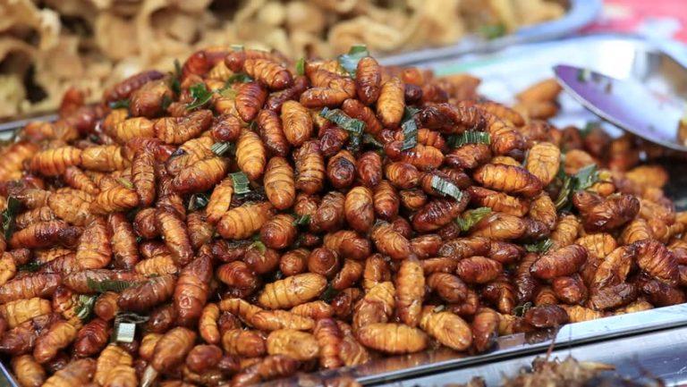 Rot Duan Larvae