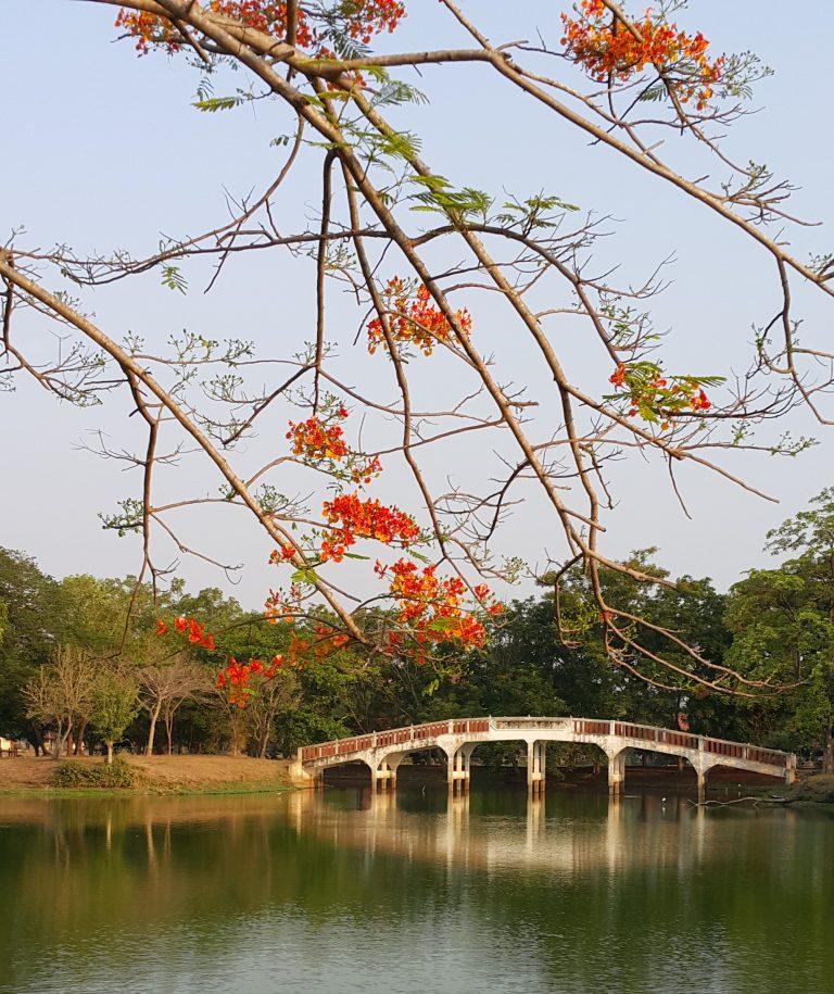 Bangkrachao