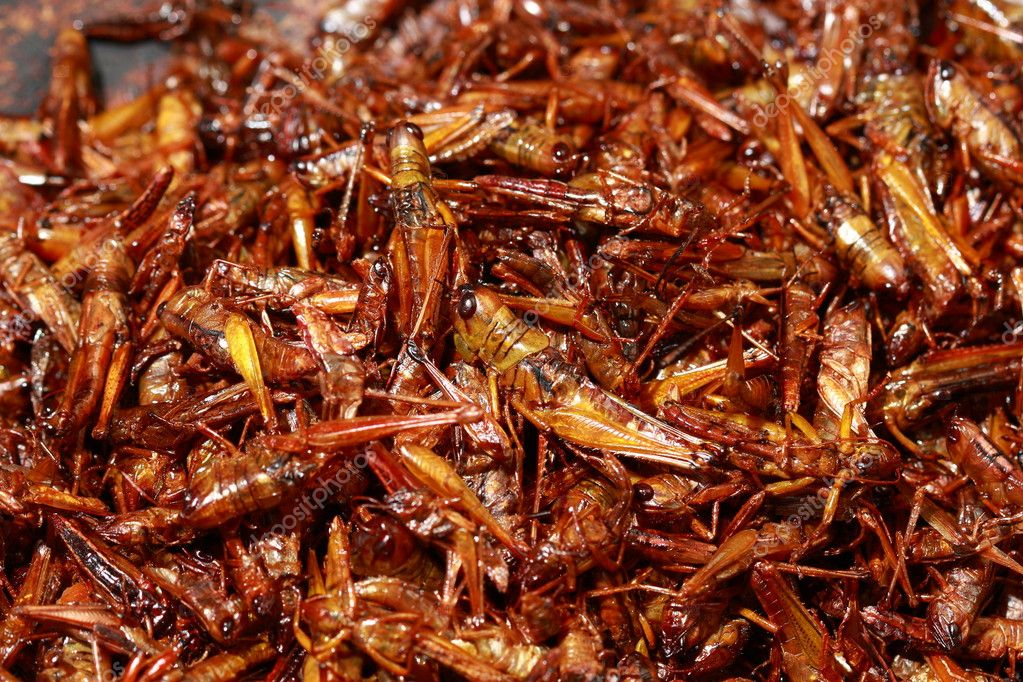 Fried grasshoppers food
