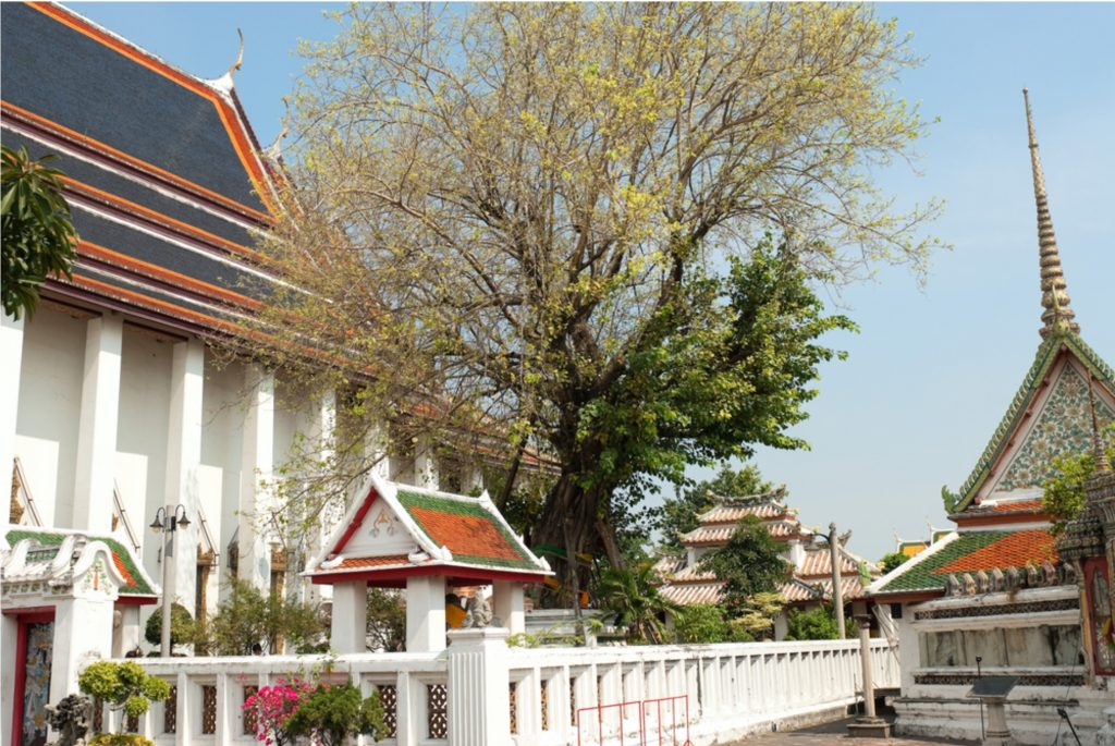 Bodhi tree at Wat Pho