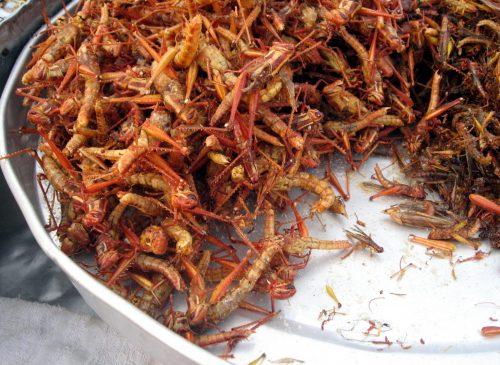 Fried grasshoppers Bangkok
